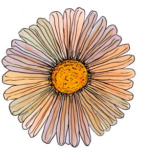 Science du bonheur - blog femmes 50 ans - quinqua - bien- vieillir