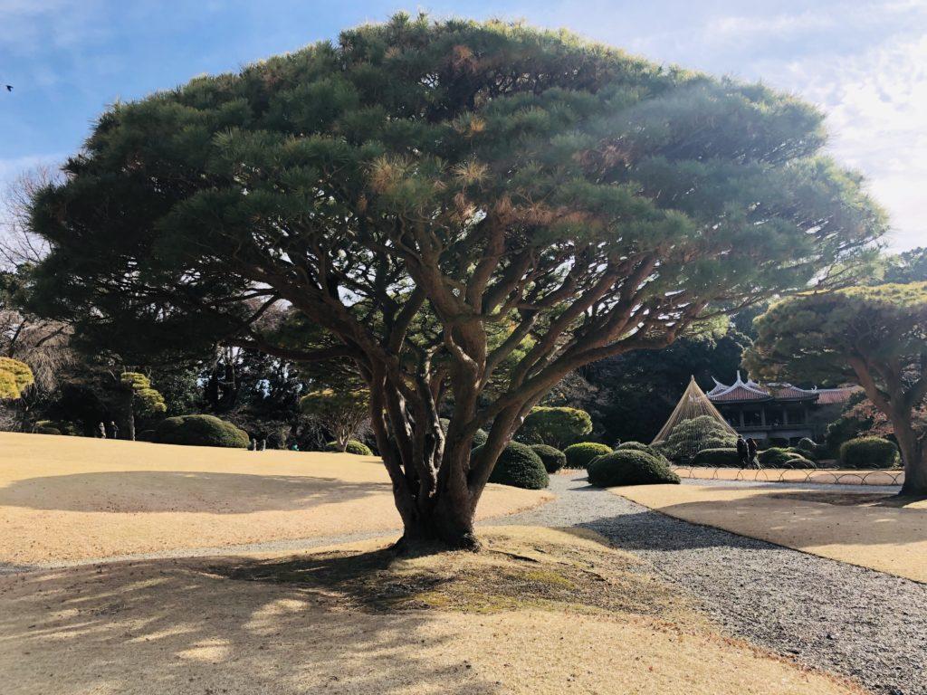 Tokyo, parc, blog femmes plus de 50 ans