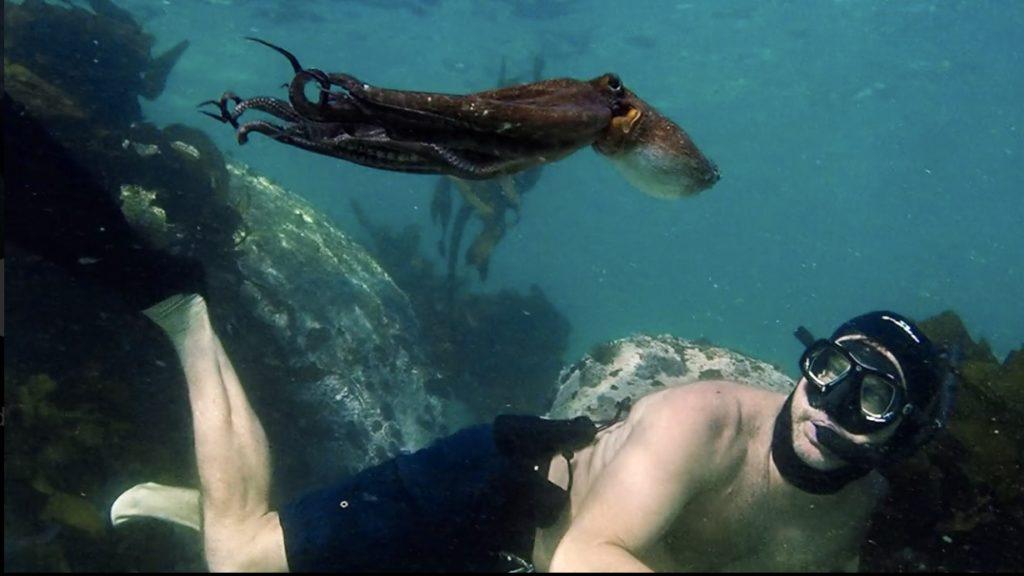La sagesse de la pieuvre, documentaire