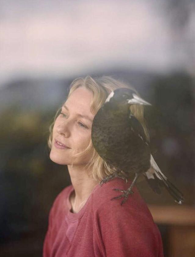 Film Penguin Bloom, blog quinqua
