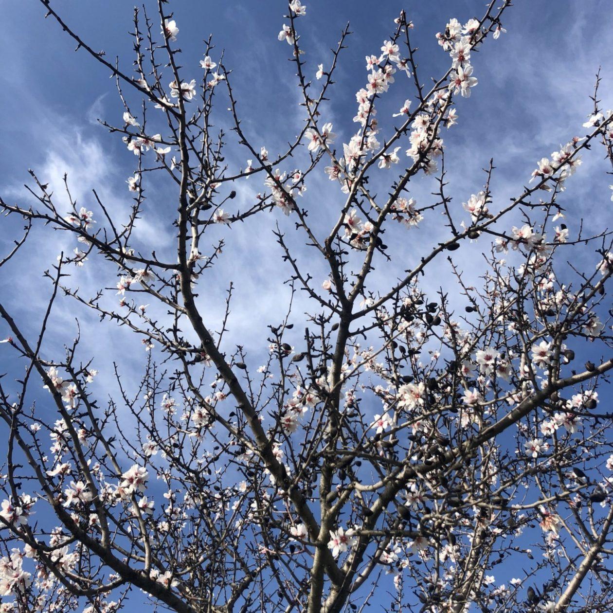 Pré-printemps, blog quiqua